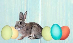 Nieuwsbrief Klein Pasen - Konijn en eien2